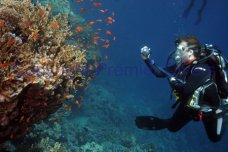 Taking photographs in the red sea